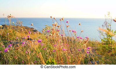 Flowers flicker in the wind against calm sea and horizon...