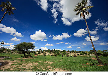 Elephants in Tarangire - Beautiful landscape of Tarangire...