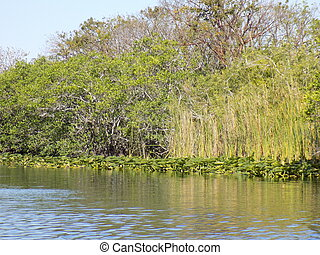 Florida Everglades - A scenic view of the Florida...