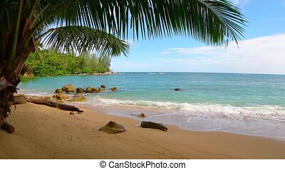 """""""Waves of tropical sea water wash peacefully over a sandy beach, shaded by palms"""""""