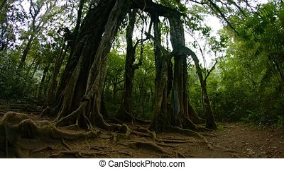 "Spooky, Gnarled Tree - ""Slow, upward tilting shot of a..."