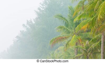 Tropical green palm trees in smog durty air - Tropical green...