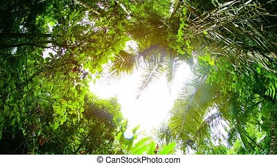 """Sun and Rain through a Clearing in the Jungle Canopy, with..."