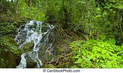 """Waterfall Flows through Tree Roots in Rainforest..."