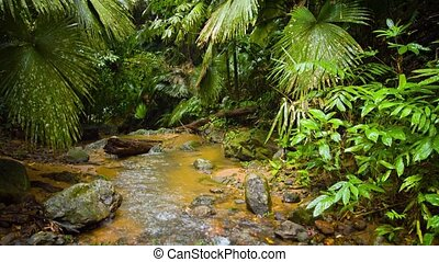 """""""Tropical Mountain Stream Flowing through a Rainforest Wilderness, with Sound"""""""