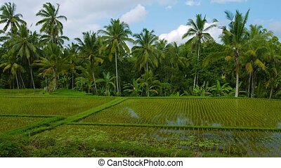 quot;Lowland Rice Fields in Bali, Indonesiaquot; - Gentle...