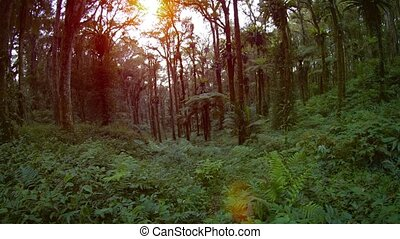 Tropical Forest Wilderness with Sound - Ferns and other...