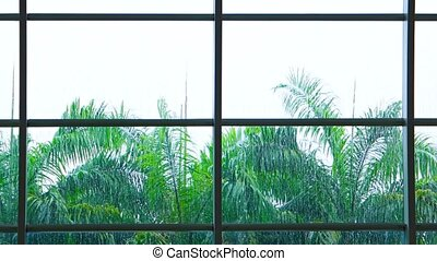Tropical Rains Sheeting down a Big Window with Palm Trees -...