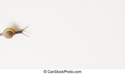 quot;Tiny Garden Snail, Isolated against White...
