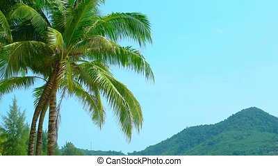 Palm Fronds Stirring in a Tropical Breeze