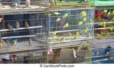 Dozens of Caged Finches in a Pet Store - Dozens of caged...