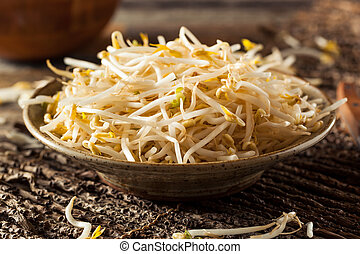 Raw Healthy White Bean Sprouts Ready for Cooking