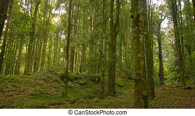 """Beautiful, Natural, Tropical Forest with Young Trees, with..."
