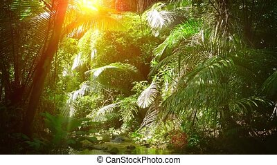 Sunshine Streaming through Palm Fronds over a Natural...