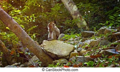 Adorable Monkey Scratches Himself while Sitting on a Rock -...