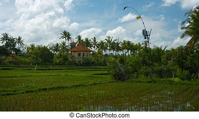 """Typical Lowland Rice Paddies on a Farm in Bali, Indonesia""..."