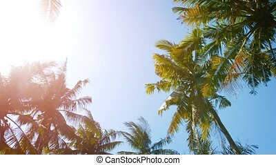 Palm Trees in the Bright Tropical Sun - Looking skyward...