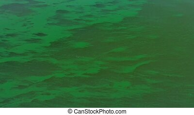 Environmental Effect of an Algal Bloom caused by...