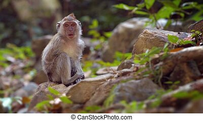 Cute Monkey Sitting on a Rock in a Nature Park - Cute and...