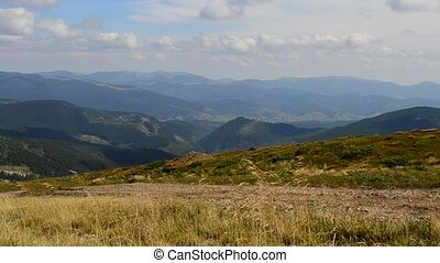 Meadow grass blown by wind in Carpathian Mountains -...
