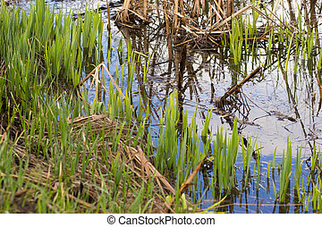 Pond with blue water in spring