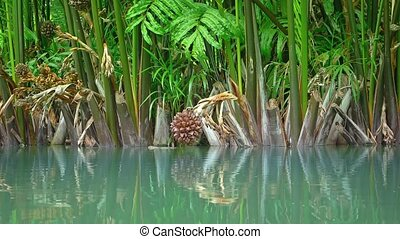 """Exotic, Tropical Plants along a Flooded Pond"""
