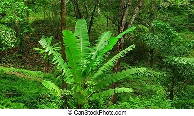 Natural Trees and Plants in a Southeast Asian Wilderness...
