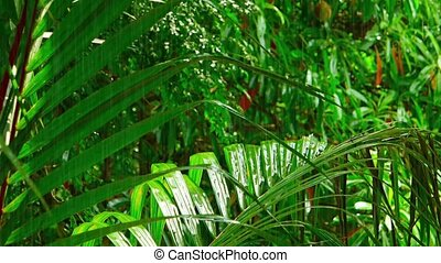 """Rain on Tropical Wilderness Greenery, with Sound"" - ""Steady..."