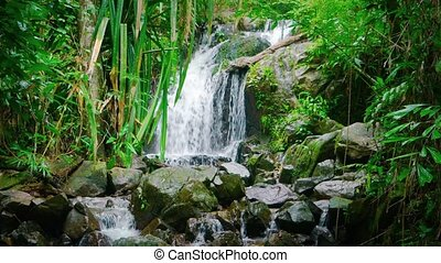 """Peaceful Natural Waterfall in a Tropical Rainforest..."