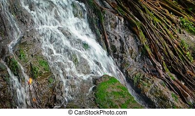 quot;Tropical Waterfall over Mossy Rocks and Tree Roots,...