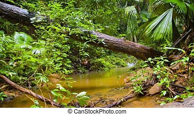 quot;Tropical Wilderness Stream on a Rainy Day, with...