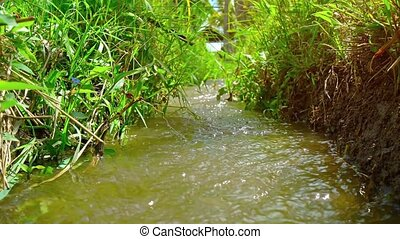 Irrigation Canal in a Rice Field. Video - Upward tilting...
