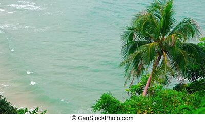 Overlooking Shot of Palm Trees over a Tropical Beach. Video...