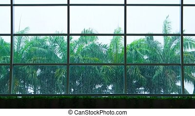 Rain and Palm Trees through the Glass a Greenhouses Glass...