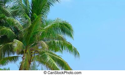 "Palm Leaves Swaying - ""Green fronds and leaves of coconut..."