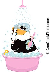 Guinea pig washed in the basin - Guinea pig washed in the...