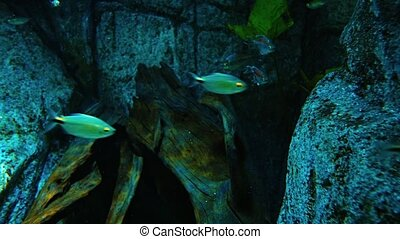 Small Tropical Fish in a Public Aquarium video - Many small,...
