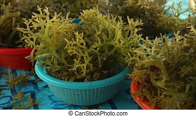 Edible Seaweed at a Public Market on Borneo Video - Edible...