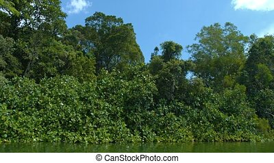Dense, Tropical Vegetation - Trees, vines and other dense...