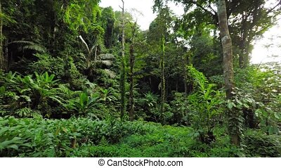 Panning Shot of a Jungle Trailhead in Southeast Asia video -...