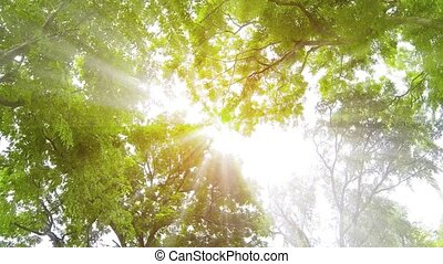 Rays of Sunshine Filtering through Overhanging Branches and...