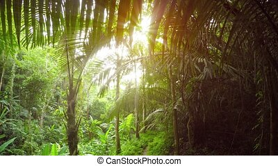Young Coconut Palms along a Nature Trail in Southeast Asia....