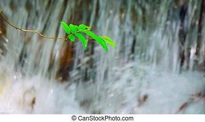 "Little Tree Branch Suspended - ""Tiny tree branch with a..."