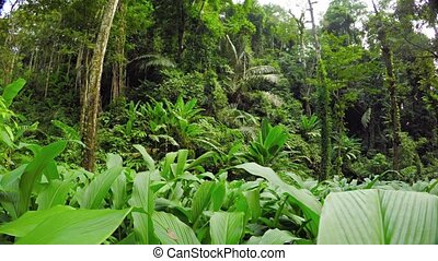 Dense Tropical Vegetation on a Rainforest Hillside - Palms,...