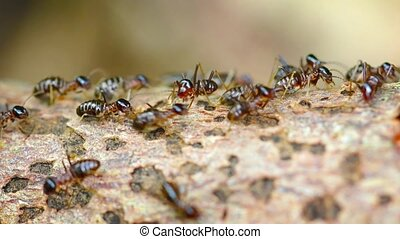 """Colony of Termites, Swarming on a Deadfall Branch"" -..."