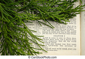 Christmas story, with greenery - Open Bible at the Gospel of...