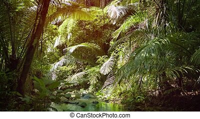 """Peaceful, Tropical Mountain Streem in a Rainforest..."
