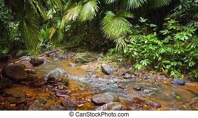 """Natural Jungle Stream on a Rainy Day, with Sound"""