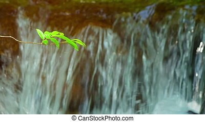 Selective Focus of Tiny Tree Leaf Stem over Waterfall -...