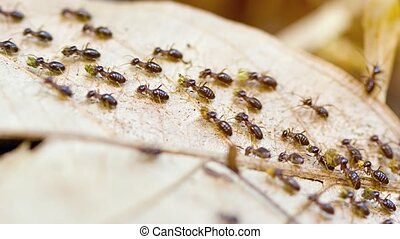 Terrestrial Termites Marching in a Column - Dozens of...